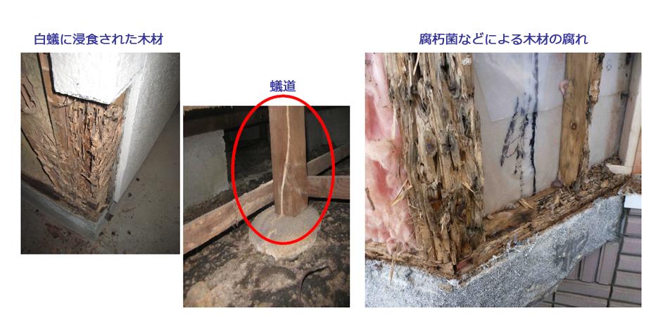 シロアリに侵食された木材。腐朽菌などによる木材の腐れ。